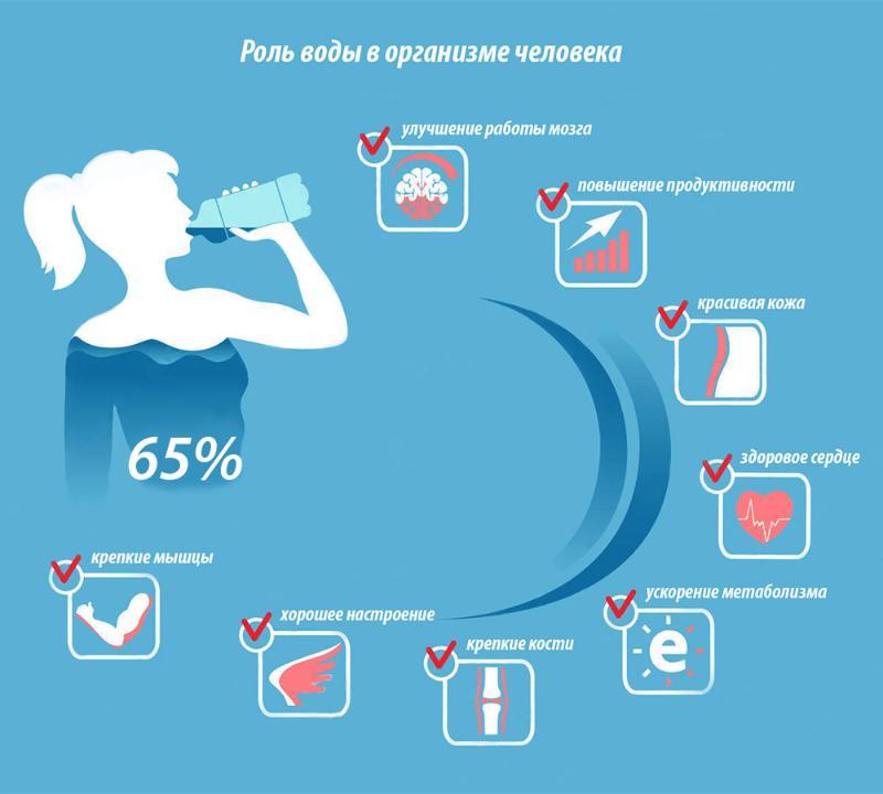 Роль воды в организме человека