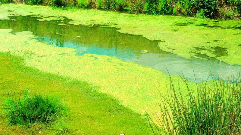 Причины цветения воды
