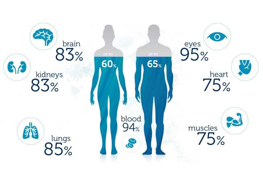 из скольки процентов состоит человек